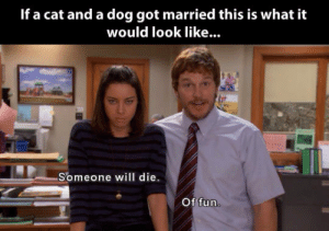 If a cat and a dog ever got married…http://advice-animal.tumblr.com/: If a cat and a dog ever got married…http://advice-animal.tumblr.com/