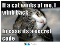 winking: If a cat winks at ne, I  wink back  In case its a secret  code  Ct f  Postize