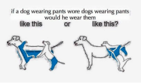 If A Dog Wore Pants: if a dog wearing pants wore dogs wearing pants  would he wear them  like this  like this?  or