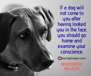 30 Pet Quotes on Love That Has No Boundaries #sayingimages #petquotes #quotes: If a dog will  not come to  you after  having looked  you in the face,  you should go  home and  examine your  conscience  SayingImages.com  WOODROW  WILSON 30 Pet Quotes on Love That Has No Boundaries #sayingimages #petquotes #quotes
