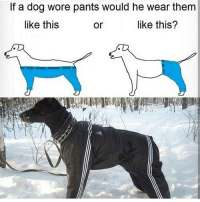 Ftw, Memes, and Paradox: If a dog wore pants would he wear them  like this  like this?  or - - Partners: @2k17dankmemes @godless.teen @callofcamper @project.schwartz @straightouttamemes.og @d.a.memes @sgtzx @bleachy_potatoe @meme_powerhouse @dank.paradox @tba6ma3ter - xbox xboxone bo3 blackops3 cod callofduty mlg true truth ps4 playstation videogames gaming meme codmemes Gamer xbox360 twitch instagram ftw steam gamer infinitewarfare xbone 2016 memes dank dankmemes pcgaming pcmasterrace instagram -エイダン