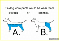 If A Dog Wore Pants: If a dog wore pants would he wear them  like this  like this?  or  VIA 9GAG.COM
