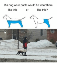 I think this debate is settled. Follow @9gag @9gagmobile 9gag instadog: If a dog wore pants would he wear them  like this?  like this  or I think this debate is settled. Follow @9gag @9gagmobile 9gag instadog