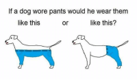Nobody knows 😂: If a dog wore pants would he wear them  like this  like this?  or Nobody knows 😂