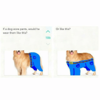 ?: If a dog wore pants, would he  wear them like this?  186  Or like this? ?