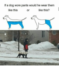 Memes in IRL.: If a dog wore pants would he wear them  like this  or  like this? Memes in IRL.