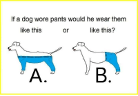 If A Dog Wore Pants: If a dog wore pants would he wear them  like this  like this?  or