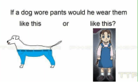 STOP: If a dog wore pants would he wear them  like this  like this?  Or STOP