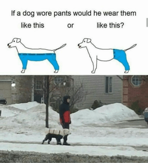 """""""if a dog wore pants"""" meme followed by picture of real life dog wearing pants in the snow: If a dog wore pants would he wear them  like this  like this?  or """"if a dog wore pants"""" meme followed by picture of real life dog wearing pants in the snow"""