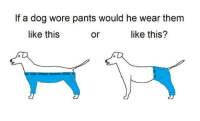 Hey guys just saw this new meme from buzfeed: If a dog wore pants would he wear them  or like this?  like this Hey guys just saw this new meme from buzfeed