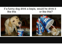 Bepis: if a funny dog drink a bepis, would he drink it  like this  or like this?  SI