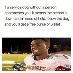 Free, Help, and Dog: if a service dog without a person  approaches you, it means the person is  down and in need of help. follow the dog  and you'll get a free purse or wallet  i, not gonna lie  They had us in taefrsthal They had me at first