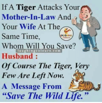 """mother in law: If A Tiger Attacks Your  Mother-In-Law And  Your Wife At The  Same Time,  Whom Will You Save?  Husband:  Of Course The Tiger, Very  Few Are Left Now.  A Message From  """"Save The Wild Life.""""  laughingcolours.com"""