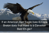 If an American Bald Eagle lives in Cape  Breton does that make is a Canadian  Bald Eh-gle? We have lots of bald eagles here so I have to wonder