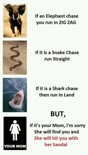 Memes, Run, and Sorry: If an Elephant chase  you run in ZIG ZAG  If it is a Snake Chase  run Straight  If it is a Shark chase  then run in Land  BUT,  If it's your Mom, I'm sorry  She will find you and  She will hit you with  her Sandal  YOUR MOM lustige Memes der Familie in www.fundoes.com/, zum des Spaßes zu bilden. Besuchen Sie einmal, und sehen Sie mehr f ... - Memes - #Besuchen #bilden #der #des #einmal #Familie #lustige #mehr #Memes #sehen #Sie #Spaßes #und #wwwfundoescom #zum