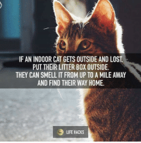 Life, Memes, and Smell: IF AN INDOOR CAT GETS OUTSIDE AND LOST  PUT THEIR LITTER BOX OUTSIDE.  THEY CAN SMELL IT FROM UP TO A MILE AWAY  AND FIND THEIR WAY HOME.  LIFE HACKS