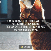 Grumpy Cat, Cat, and Box: IF AN INDOOR CAT GETS OUTSIDE AND LOST  PUT THEIR LITTER BOX OUTSIDE.  THEY CAN SMELL IT FROM UP TO A MILE AWAY  AND FIND THEIR WAY HOME.  LIFE HACKS
