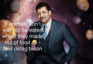 Animals, Food, and Bison: If animals don't  want to be eate  why tf they made  out of food  Neil defag bison Exdee