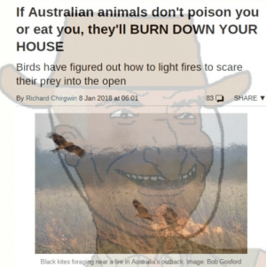 No wonder flat earthers dont think its a real place. by Toasty_Jam FOLLOW 4 MORE MEMES.: If Australian animals don't poison you  or eat you, they'll BURN DOWN YOUR  HOUSE  Birds have figured out how to light fires to scare  their prey into the open  By Richard Chirgwin 8 Jan 2018 at 06:01  SHARE  83  Black kites foraging near a fire in Australia's outback. Image: Bob Gosford No wonder flat earthers dont think its a real place. by Toasty_Jam FOLLOW 4 MORE MEMES.
