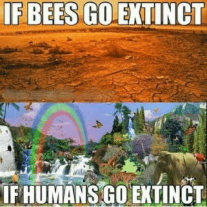 Space, Bees, and More: IF BEES GO EXTINCT  IF HUMANS GO EXTINCT At least there would be more space