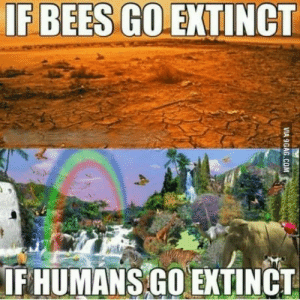 When bees go, so goes our food: IF BEES GO EXTINCT  IF HUMANS GO EXTINCT  VIA 9GAG.COM When bees go, so goes our food