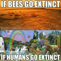 Im 14 & This Is Deep, Bees, and Ifs: IF BEES GOLEXTINCT  IF HUMANSGO EXTINCT Extinction