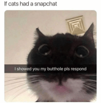Cats, Memes, and Snapchat: If cats had a snapchat  I showed you my butthole pls respond