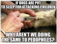 Children, Dogs, and Memes: IF DOGS ARE PUT  TO SLEEP FOR ATTACKING CHILDREN  WHYAREN'T WE DOING  THE SAME TO PEDOPHILES? SAY IT LOUDER FOR THE DEMOCRATS IN THE BACK!!! Pc: @drunkamerica