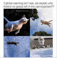 Memes, Tough, and Globalization: if global warming isn't real, pls explain why  there's no gravity left in the catmosphere??  Oasleepinthemuseum @asleepinthemuseum asks the tough questions and makes the best memes! Follow @asleepinthemuseum today and unlock life's greatest mysteries. 🙌🏼