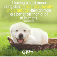 mercola: If having a soul means  being able to feel love, loyalty  and gratitude, then animals  are better off than a lot  of humans.  JAMES HERRIOT  Healthy  pets  With Dr. Karen Becker  HealthyPets.Mercola.com
