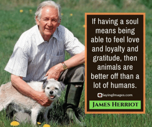 Animals, Love, and Quotes: If having a soul  means being  able to feel love  and loyalty and  gratitude, then  animals are  better off than a  lot of humans.  SayingImages.com  JAMES HERRIOT 30 Pet Quotes on Love That Has No Boundaries #sayingimages #petquotes #quotes