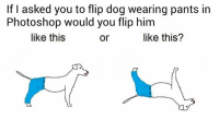 Dog Wearing Pants: If I asked you to flip dog wearing pants in  Photoshop would you flip him  like this  like this?  or