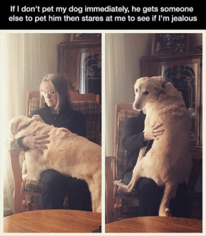 Dog Memes Of The Day 32 Pics – Ep33 #dogs #doglovers #lovelyanimalsworld - Lovely Animals World: If I don't pet my dog immediately, he gets someone  else to pet him then stares at me to see if I'm jealous Dog Memes Of The Day 32 Pics – Ep33 #dogs #doglovers #lovelyanimalsworld - Lovely Animals World
