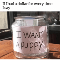 "Puppy, Time, and For: If I had a dollar for every time  I say  I WANT  Apuppy If I had a dollar for every time I say ""I want a puppy"" 😂🐶"