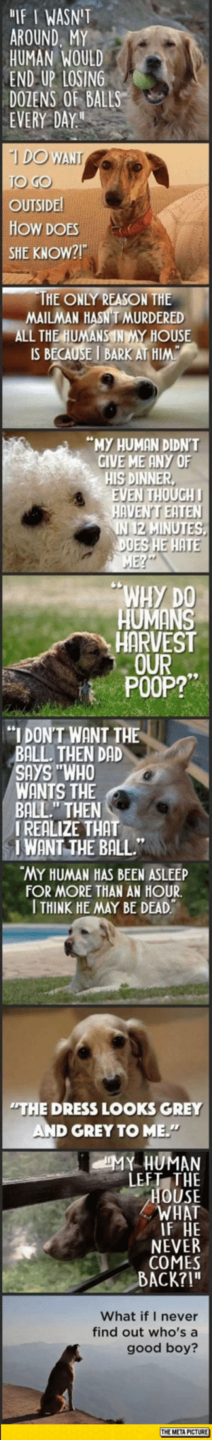 "srsfunny:  The World From A Dog's Perspective: IF I WASNIT  AROUND. MY  HUMAN WOULD  END UP LOSING  DOZENS OF BALLS  EVERY DAY  DO WT  OUTSIDE  HOW DOES  SHE KNOW?!  HE ONLY REASON THE  MAILMAN HASN T MURDERED  ALL THE HUMANSNMY HOUSE  IS BECAUSE I BARK AT HIM  ""MY HUMAN DIDN'T  GIVE ME ANY OF  HIS DINNER  VEN THOUGH  AVEN'T EATEN  2 MINUTES  ES HE HATE  N 1  WHy DO  HUMANS  HARVEST  OURー  POOP?  ""I DONT WANT THE  BALL. THEN DAD  SAYS ""WHO  WANTS THE  BALL"" THEN  IREALIZE THAT  IWANT THE BALL""  MY HUMAN HAS BEEN ASLEEP  FOR MORE THAN AN HOUR  THINK HE MAY BE DEAD  THE DRESS LOOKS GREY  AND GREY TO ME.  LEFT THE  HOUSE  WHAT  F HE  NEVER  COMES  ACK?!""  What if I never  find out who's a  good boy?  THE META PICTURE srsfunny:  The World From A Dog's Perspective"