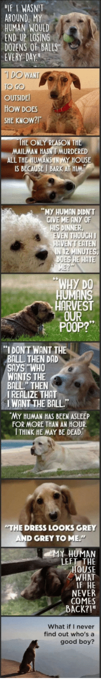 """Dad, Poop, and The Dress: """"IF I WASNT  AROUND. MY  HUMAN WOUL  END UP LOSING  DOZENS OF BALLS  EVERY DAY  O GO  OUTSIDE  HOW DOES  SHE KNOW?  HE ONLY REASON THE  MAILMAN HAS MURDERED  ALL THE HUMANS NMY HOUSE  IS BECAUSE I BARK AT HIM  MY HUMAN DIDN'T  GIVE ME ANY OF  HIS DINNER  VEN THOUGH  E HAT  WHY DO  HUMANS  HARVEST  OUR  POOP?""""  """"I DONT WANT THE  BALL. THEN DAD  SAYS """"WHO  WANTS THE  BALL."""" THEN  I REALIZE THAT  I WANT THE BALL  MY HUMAN HAS BEEN ASLEEP  FOR MORE THAN AN HOUR  I THINK HE MAY BE DEAD  THE DRESS LOOKS GREY  AND GREY TO ME.  LEFT THE  HOUSE  WHAT  F HE  NEVER  COMES  ACK?!""""  What if I never  find out who's a  good boy? <p>The World From A Dog's Perspective.</p>"""