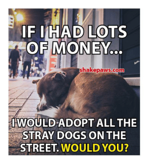 I wish more people felt this way: IF IHAD LOTS  OF MONEY..  shakepaws.co  IWOULD ADOPT ALL THE  STRAY DOGS ON THE  STREET. WOULD YOU? I wish more people felt this way