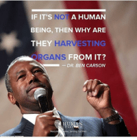 America, Ben Carson, and Life: IF IT'S NOT A HUMAN  BEING, THEN WHY ARE  THEY  HARVESTING  RGANS  FROM IT?  DR. BEN CARSON  HUMAN  COALI  Rescui  ren. Serving Families Pro-life🇺🇸🇺🇸 liberal maga conservative constitution like follow presidenttrump resist stupidliberals merica america stupiddemocrats donaldtrump trump2016 patriot trump yeeyee presidentdonaldtrump draintheswamp makeamericagreatagain trumptrain triggered Partners --------------------- @too_savage_for_democrats🐍 @raised_right_🐘 @conservativemovement🎯 @millennial_republicans🇺🇸 @conservative.nation1776😎 @floridaconservatives🌴