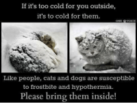 Cats, Memes, and Voice: If it's too cold for you outside,  it's to cold for them.  ONE VOICE  Like people, cats and dogs are susceptible  to frostbite and hypothermia.  Please bring them inside! If you see an animal kept outside in this weather- report it!! 😡