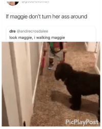 Ass, Lol, and Girl Memes: If maggie don't turn her ass around  dre @andrecrosdalee  look maggie, i walking maggie  PicPlayPost Look Maggie ☺️ lol