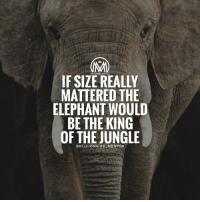 *double tap* if you agree😉 millionairementor: IF MILLIONAIRE MENTOR  MATTERED THE  ELEPHANT WOULD  BE THE KING  OF THE JUNGLE  MILLIONAIRE MENTOR *double tap* if you agree😉 millionairementor