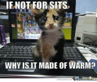 Memes, 🤖, and Wins: IF NOT FOR SITS  WHY ISNT MADE OF WARM?  memecenter.com MomeCenu You win this time!
