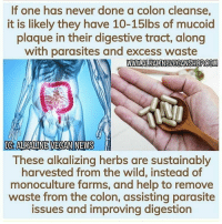 Follow @alkaline_vegan_news To purchase our colon detox capsules, click the link in bio or visit alkalineveganshop.com. All orders take 3 to 5 days to ship. Email all questions to info@alkalineveganshop.com.: If one has never done a colon cleanse,  it is likely they have 10-15lbs of mucoid  plaque in their digestive tract, along  with parasites and excess waste  IC:ALKALINE VECAN NEWS  These alkalizing herbs are sustainably  harvested from the wild, instead of  monoculture farms, and help to remove  waste from the colon, assisting parasite  issues and improving digestion Follow @alkaline_vegan_news To purchase our colon detox capsules, click the link in bio or visit alkalineveganshop.com. All orders take 3 to 5 days to ship. Email all questions to info@alkalineveganshop.com.