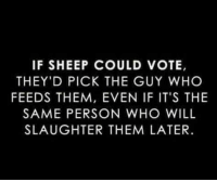 slaughter: IF SHEEP COULD VOTE,  THEY'D PICK THE GUY WHO  FEEDS THEM, EVEN IF IT'S THE  SAME PERSON WHO WILL  SLAUGHTER THEM LATER.