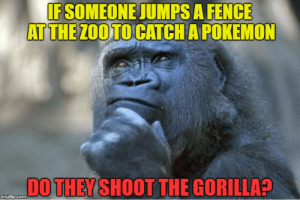The thinking gorilla - Imgflip: IF SOMEONE JUMPS A FENCE  AT THE ZOO TO CATCH A POKEMON  DO THEY SHOOT THE GORILLA?  imgflip.com The thinking gorilla - Imgflip