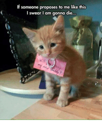 Grumpy Cat, I Swear, and Proposal: If someone proposes to me like this  I swear I am gonna die.