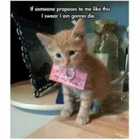 Definitely, Funny, and Ted: If someone proposes to me like this  I swear I am gonna die Definitely yes (@hilarious.ted)