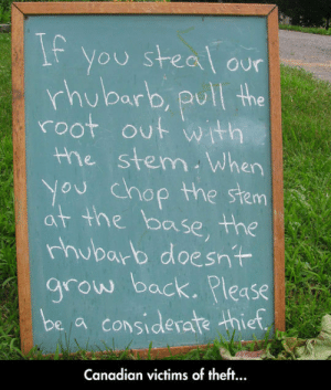 lol-caster:  Be a Considerate Thief: If  steal our  you  rhubarb, pull the  root out with  the stem. When  you chop the stem  at the base, the  rhubarb doesn't  grow back. Please  be a considerate thief.  Canadian victims of theft... lol-caster:  Be a Considerate Thief