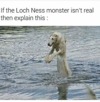 loch ness monster: If the Loch Ness monster isn't real  then explain this