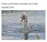 I feel like his name is Nigel: If the Lochness monster isn't real  explain this  Shi  ead Steve I feel like his name is Nigel